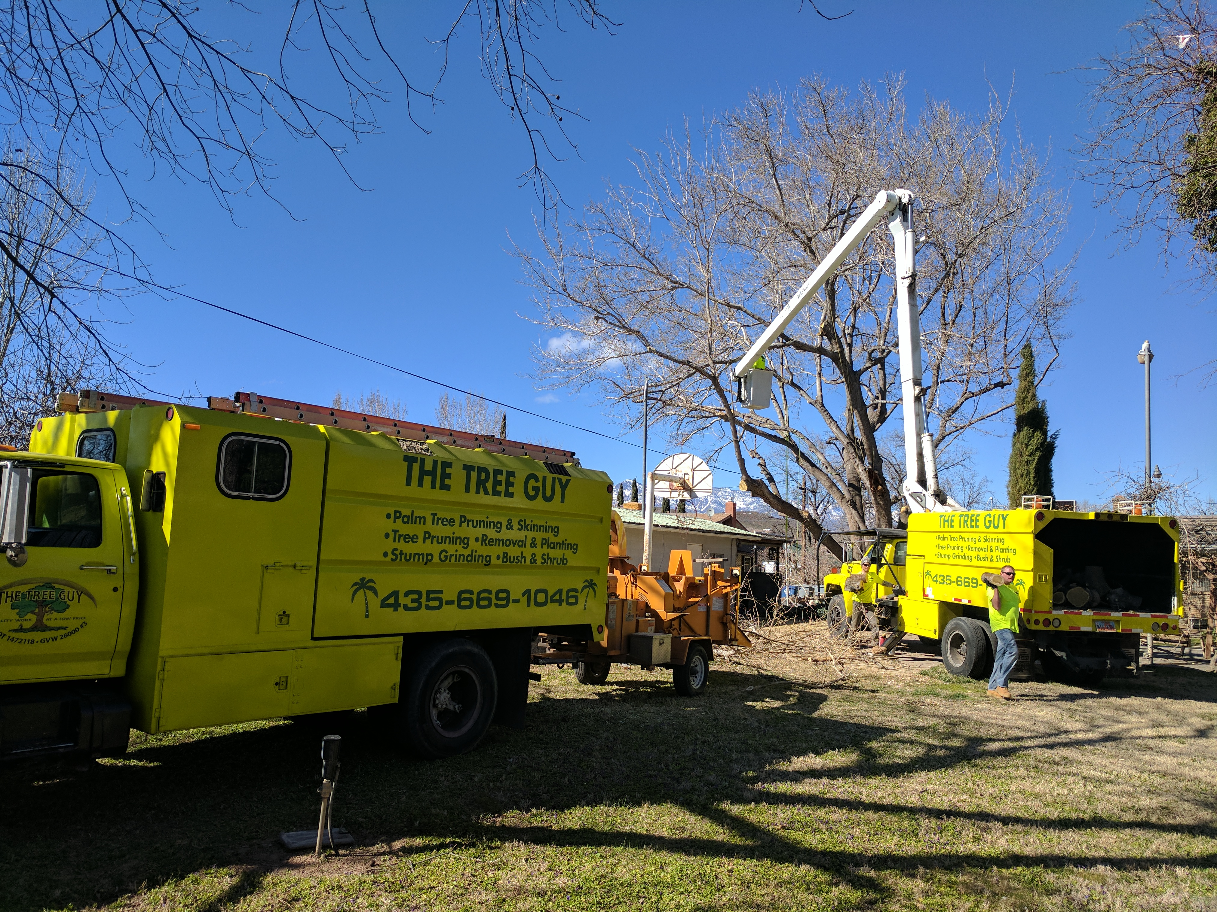 Tree Removal St george